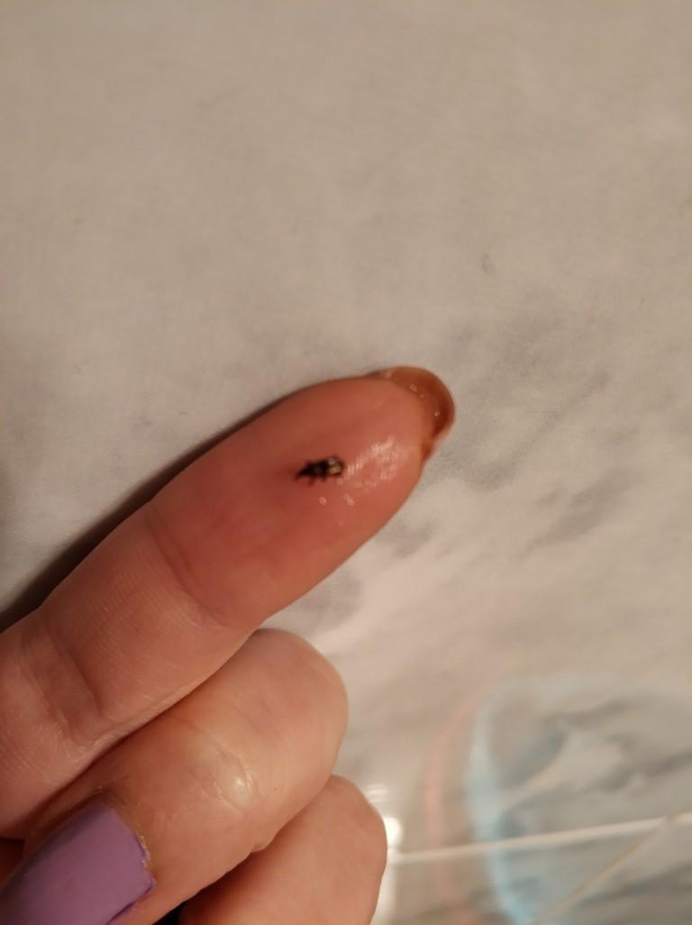 这是什么虫?猫饮水机里面和机器边上发现的,急急急