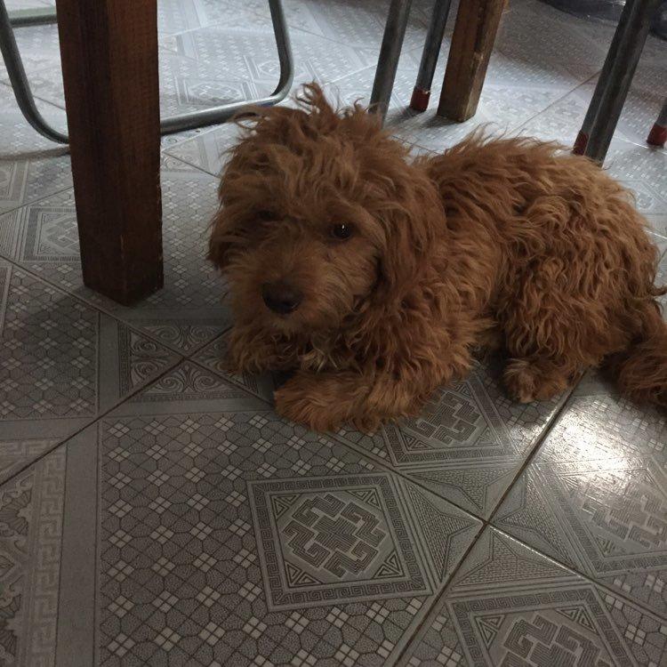 今天家里来了一只小狗,赶都赶不走,不知道是什么品种。