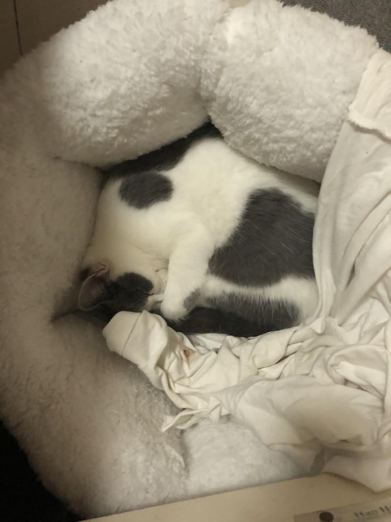 过年 因为我要回老家 昨天把猫送去朋友家,结果她不吃不喝 不