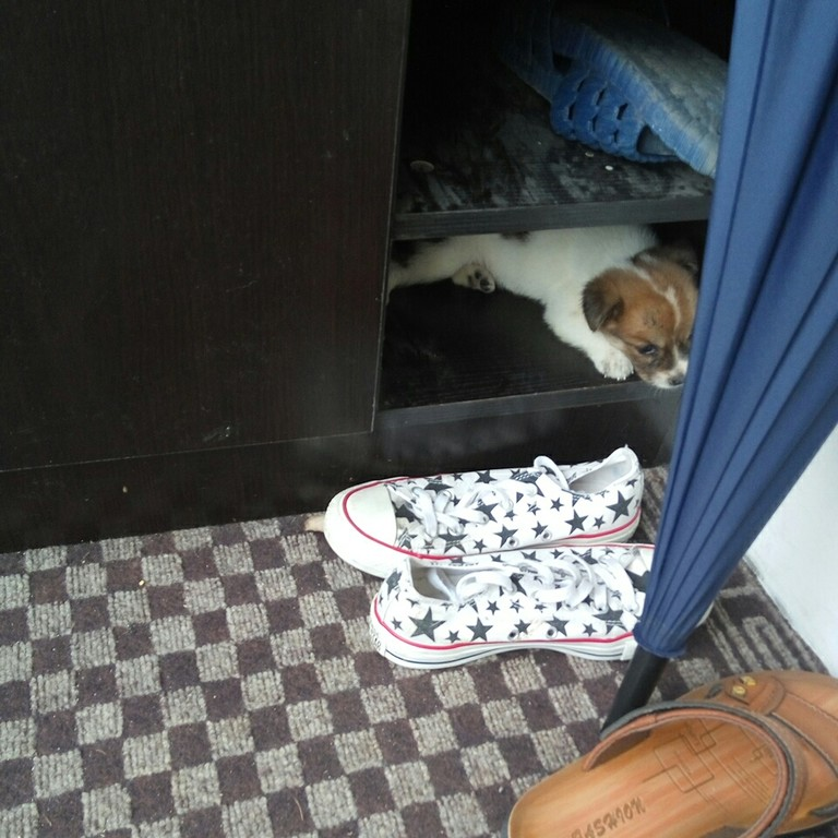 狗狗总喜欢跑到鞋柜里是为什么?
