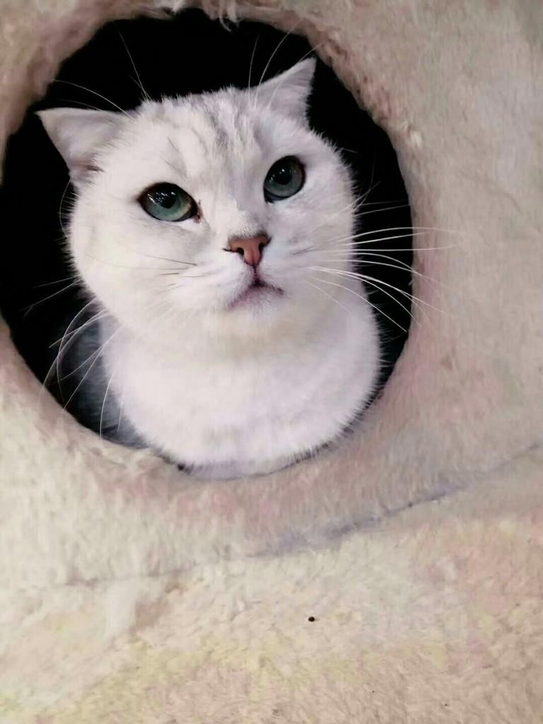 猫咪呕吐不吃东西怎办办?