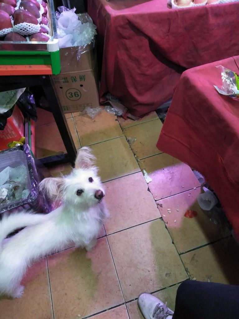 我家的串串狗一岁了平时特别温顺今天不知道怎么了,特别反常。见
