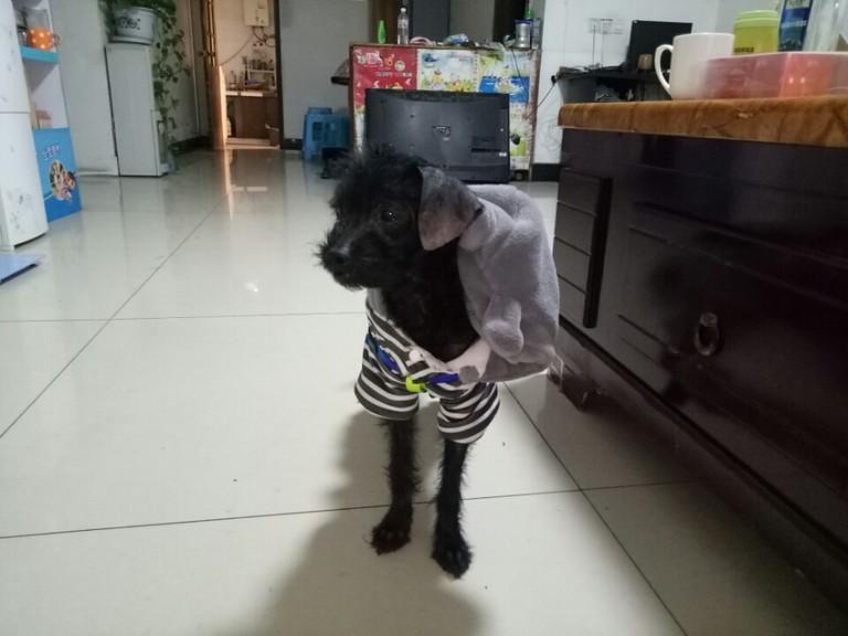 养了一只流浪的狗狗,腹部这里有个包,请问是怎么回事