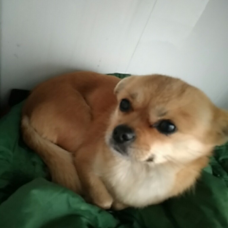 这是什么狗
