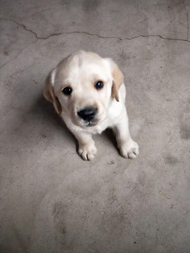 我家狗狗出生五十多天了抱回来四五天了,因为白天要上班把饭放哪